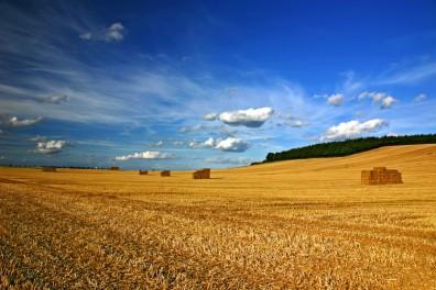 harvest-396x264